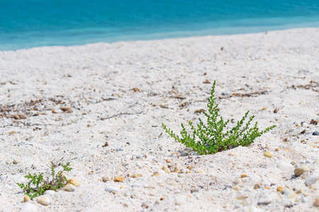 foreshore: green plant by Stintino foreshore
