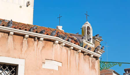 red cross red bird: pigeons on a church roof
