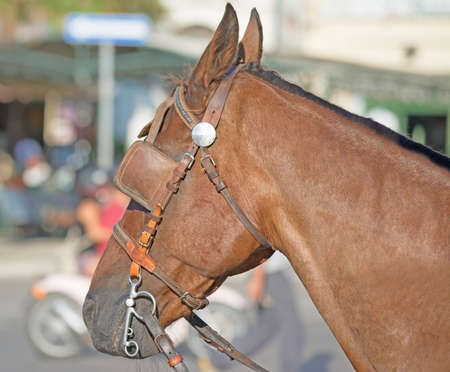 blinders: close up of a horse with blinders