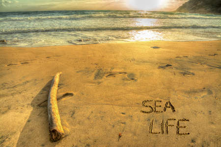 sea life written on a golden shore at sunset photo