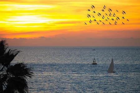 flamingos flock and boat at sunset photo