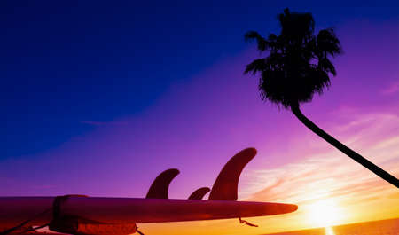 surfboard fin: surfboard and palm silhouette by the sea at sunset. Stock Photo