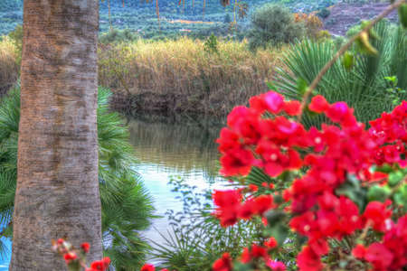 glimpse: glimpse of Temo river seen through a palm tree and a bougainvillea. Stock Photo
