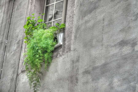 green plants in an old window sill. Shot in Bosa. Processed for selective desaturation effect. photo