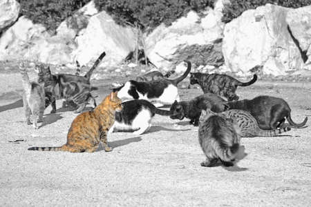 saturation: wild cats eating on a sunny day. Processed for selective saturation effect.