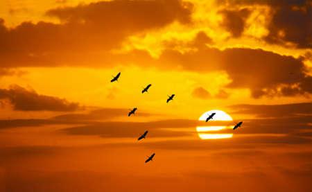 pajaros: v formaci�n en forma de volar en un cielo de color naranja con un sol brillante al atardecer