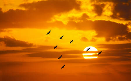 v shaped formation flying in an orange sky with a shining sun at sunset