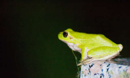 single eyed: green frog sitting on a granite table. Water color effect Stock Photo