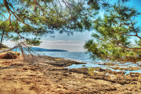 mapped: pine trees by the rocky shore in Mugoni beach, Sardinia. Processed for hdr tone mapping effect