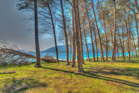 pinewood: pinewood by the sea in Mugoni, Sardinia. Processed for hdr tone mapping effect