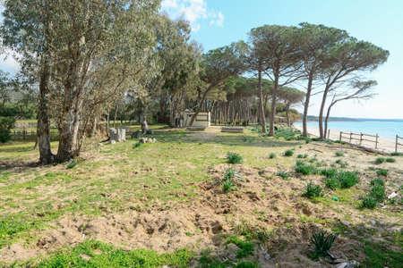 pinewood: pinewood by the sea in Mugoni beach, Sardinia Stock Photo