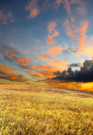 wheat field under a scenic sky at sunset photo