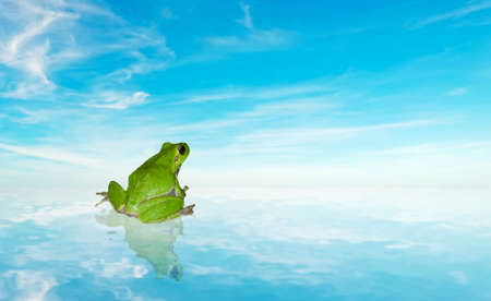 green frog on the water under a blue sky photo