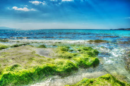 green seaweeds on the rocks in Le Bombarde beach, Italy. Processed for hdr tone mapping effect