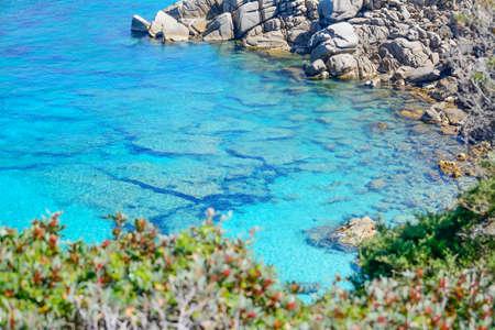 capo: rocks and plants by Capo Testa shoreline, Sardinia