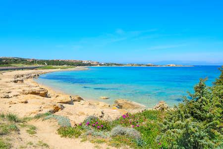 capo: Capo Testa shoreline with vegetation and turquoise water