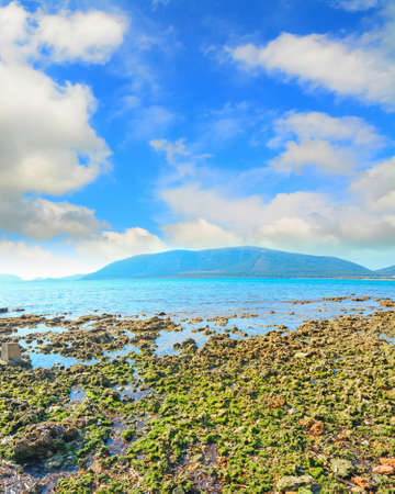 seaweeds and rocks by the sea in Mugoni beach, Sardinia Stock Photo