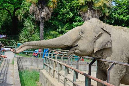 zoologico: elefante tronco alcanza los beb�s en el parque zool�gico
