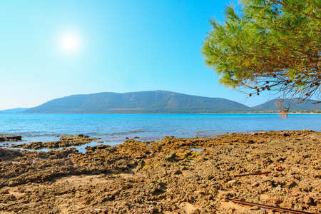 mapped: pine tree by the rocky shore in Mugoni beach, Sardinia Stock Photo
