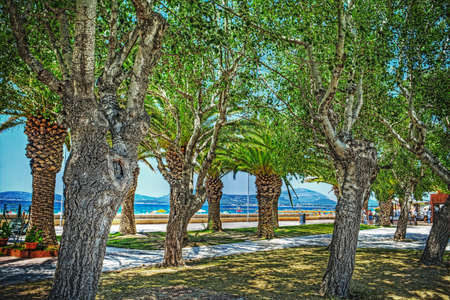 nearness: trees by Alghero seafront in hdr tone mapping effect