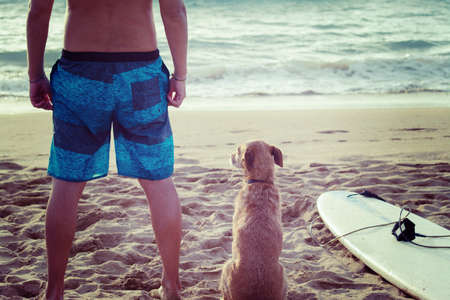 sport silhouette: surfer and dog with a surfboard on the beach