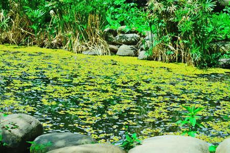 water garden: tropical garden by the water in Italy