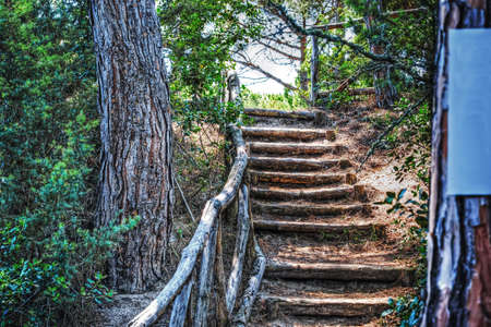 pinewood: stairway in a pinewood in Platamona, Italy