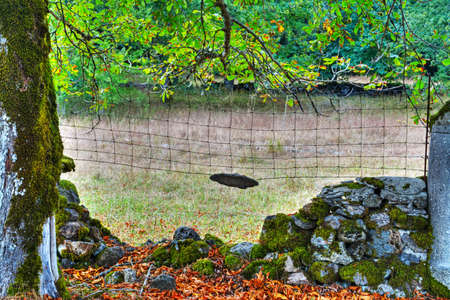 drystone: old dry-stone wall with moss in Sardinia, Italy