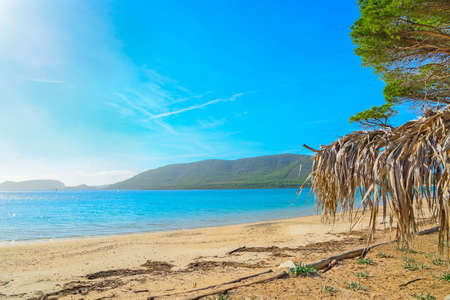 palm parasol in Mugoni strand, Sardinië