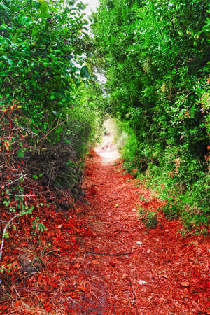 dirt path: red leaves and green plants in a dirt path in Sardinia, Italy Stock Photo