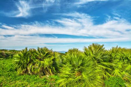 vegetation: tropical vegetation in sardinia, Italy