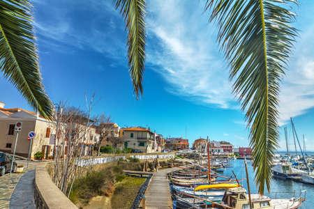 palm branches in Stintino old harbor, Sardinia