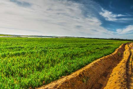 furrow: furrow in a green field under a blue sky