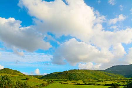 english oak: green hill and blue sky in Sardinia, Italy