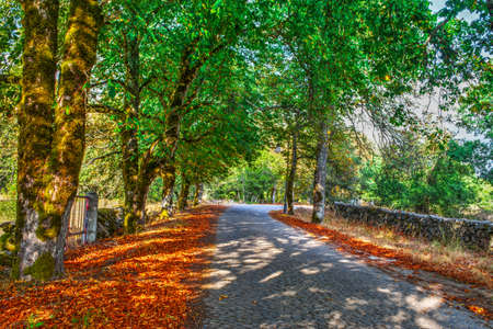 paved: paved street in autumn in Sardinia, Italy