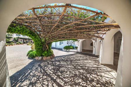 arbor: Tree arbor in Poltu Quatu, Sardinia