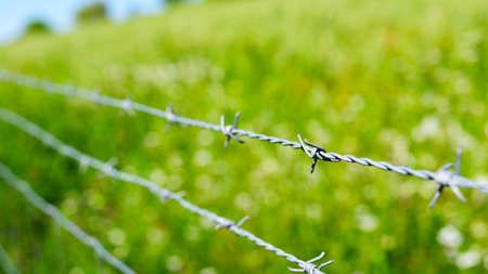 barb wire: close up of a barb wire in a green field