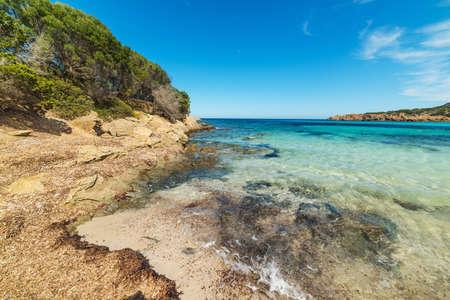 seaweeds: seaweeds in Cala Granu beach, Sardinia