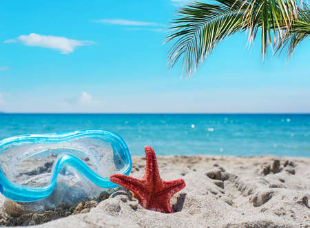 sports shell: diving mask and red starfish under a palm tree