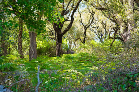 naturalistic: fern and tree in a Sardinian forest, Italy