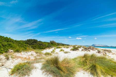 cinta: sand dune in La Cinta beach, Sardinia Stock Photo
