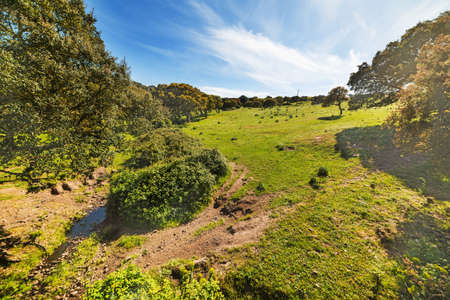 expanse: green field with trees under a blue sky with clouds Stock Photo