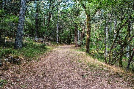 dirt path: dirt path in the forest, Sardinia