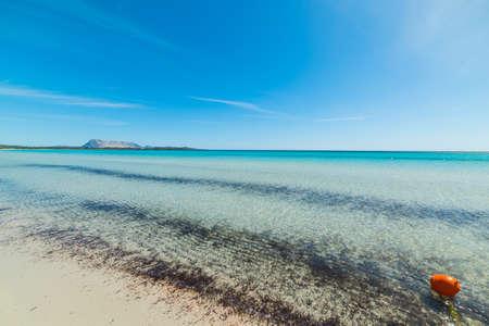 beach buoy: orange buoy in La Cinta beach, Sardinia