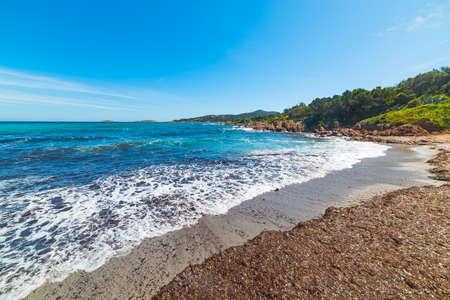 seaweeds: seaweeds in Piccolo Pevero beach, Sardinia