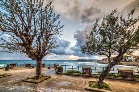 dry trees in Alghero seafront, Italy