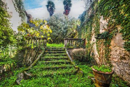 green abandoned garden in Tuscany, Italy