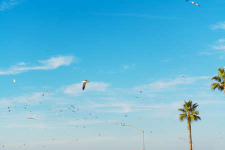 seagulls flying over palm trees in La Jolla beach, San Diego