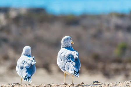 copule of seagulls standing on a wall Stock Photo