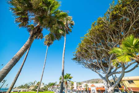 Trees in Laguna Beach seafront, California Stock Photo